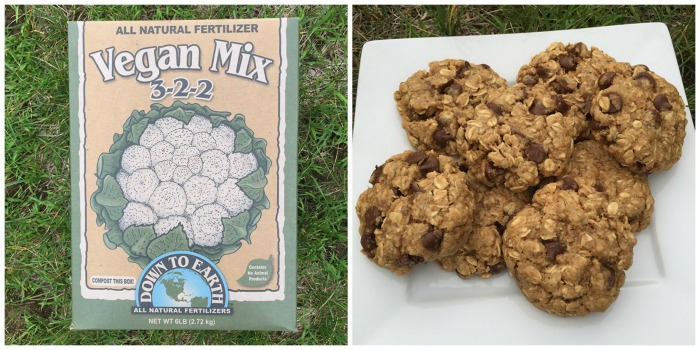 6/21/15- Tour of My Veganic Garden + Healthy Cookie Recipe Discovery